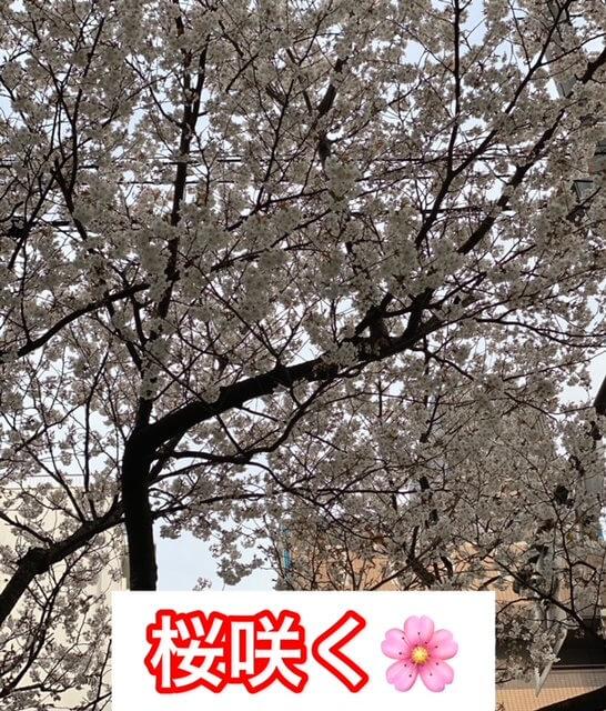 桜咲く桜木町